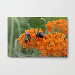 Pollinators Metal Print