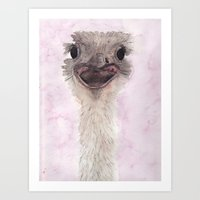 ostrich Art Prints featuring Ostrich by Catherine Johnson