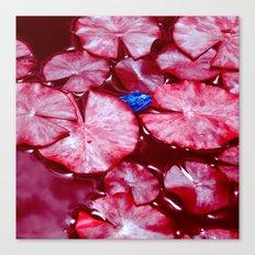 blue frog VI Canvas Print