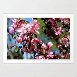 Spring Minnesota Art Print