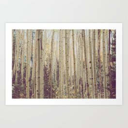 Aspen Forest Rustic Photography Art Print