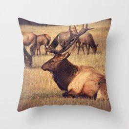 RESTING BULK ON FIELD Throw Pillow