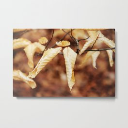Albino Leaves Metal Print