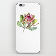 Protea Flower iPhone & iPod Skin