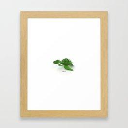 turtle. Framed Art Print