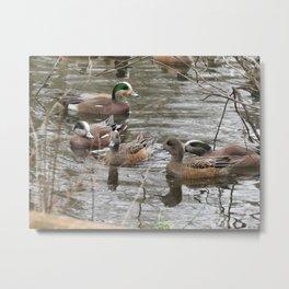 Beautiful ducks at Wapato Park Metal Print