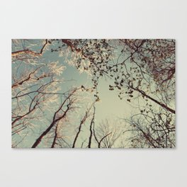 Spring trees in forest Canvas Print