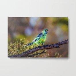 Mallee Ringneck Parrot Metal Print