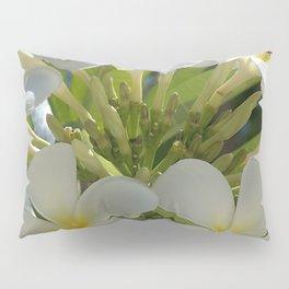 Plumerias (Bali, Indonesia) Pillow Sham
