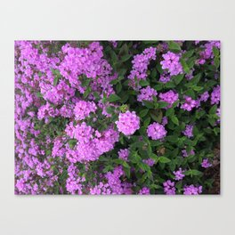 Sring, blooming Canvas Print