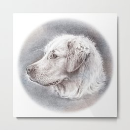 Golden Retriever Dog Drawing Metal Print