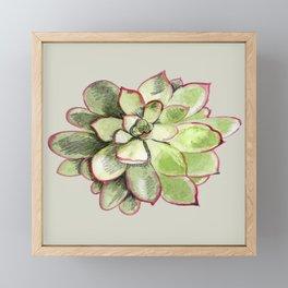 Echeveria Framed Mini Art Print