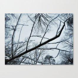 Little Ice Tree Canvas Print