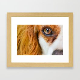 Face of a dog Framed Art Print