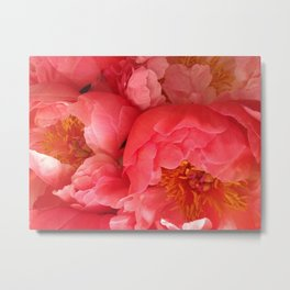 "Pink Camellias ""Angels Flowers"" Metal Print"