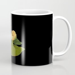 Nymphaea Lutea Mary Delany British Botanical Floral Art Paper Flowers Black Background Coffee Mug