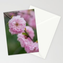 Flowering Almonds 2 Stationery Cards