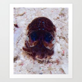 Bobtail squid Art Print