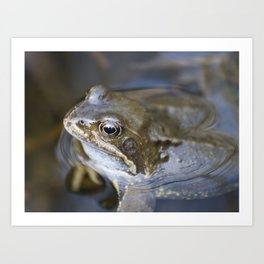 Croak the frog Art Print