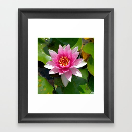 water lily VI Framed Art Print