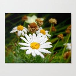 Daisy Life Canvas Print