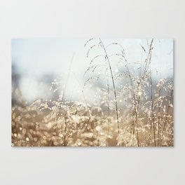 Gold Blue Sparkle Nature Photography, Dew Drop Grass Brown, Morning Water Dewdrops, Magical Bokeh Canvas Print