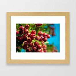 Red Summer Framed Art Print