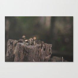 Tiny Mushrooms Canvas Print