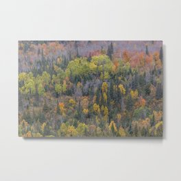 Detail of Peak Fall Colors in Northern Minnesota Metal Print