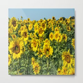 Field of Sunflowers-2 Metal Print
