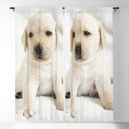 Golden labrador puppy Blackout Curtain