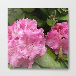 Rhododendron After Rain Metal Print