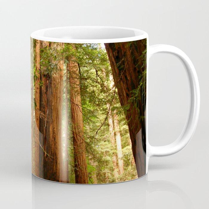 Muir Woods Walkway Coffee Mug