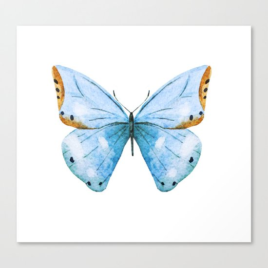 Butterfly 04 Canvas Print