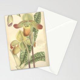 Flower 7629 paphiopedilum mastersianum Stationery Cards