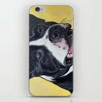 pit bull iPhone & iPod Skins featuring Pit Bull by WOOF Factory