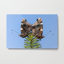 Red Admiral Butterflies Mating Metal Print