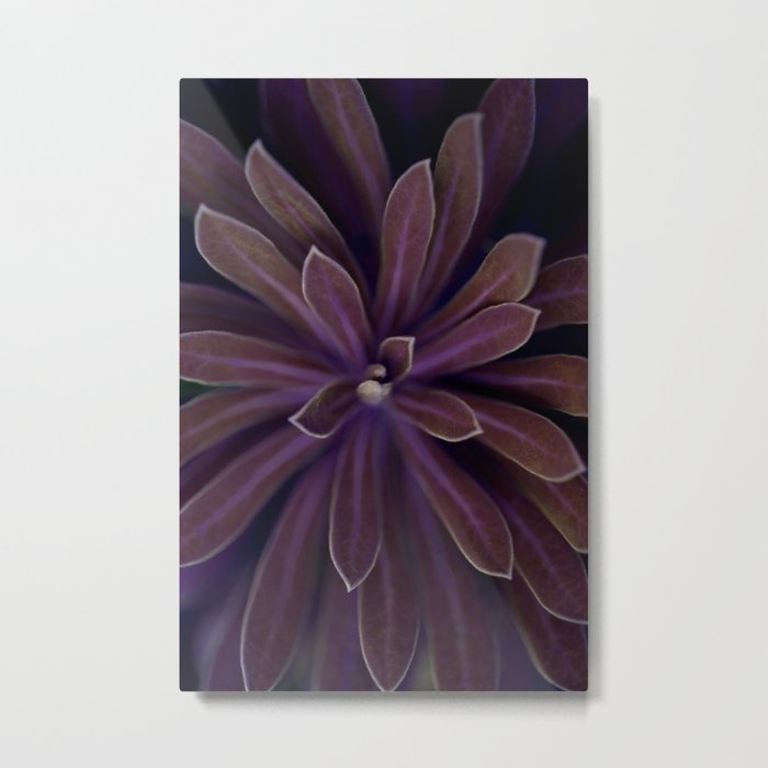 Pink Succulent in the Darkness Metal Print