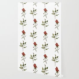 Loose Watercolor Rosebuds Wallpaper