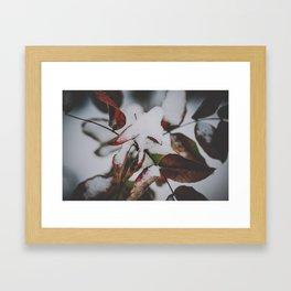 _DSC7051 Framed Art Print