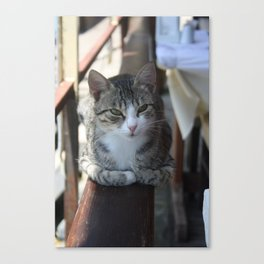 Cute Tabby Cat - Sitting On The Fence Canvas Print