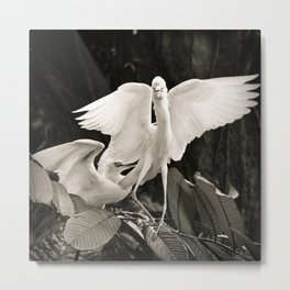 White bird dance 1 Metal Print