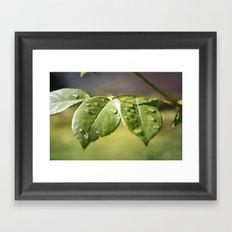Fresh Dew Drops Framed Art Print