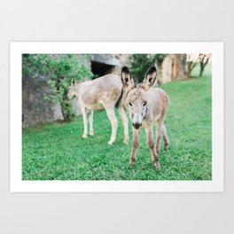 Baby Donkey Art Print