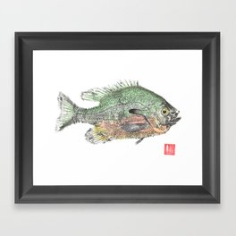 Red Breasted Sunfish 2 Framed Art Print