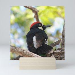 Acorn Woodpecker in Malibu Mini Art Print