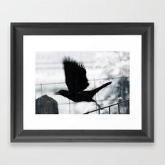 Blackbird 3 Framed Art Print