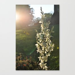 Dream of Sunlight Canvas Print