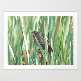 Cattails and the Bird Art Print