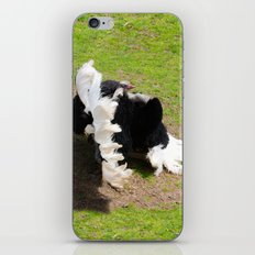 Love the show Ostrich iPhone & iPod Skin